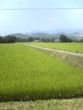 今日は福島